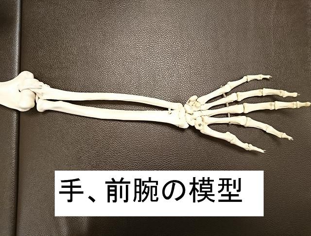 手、前腕部の骨