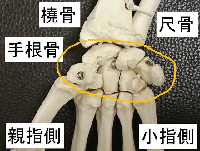 手根部の骨